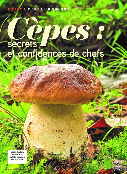 Cèpes : secrets et confidences de Chefs